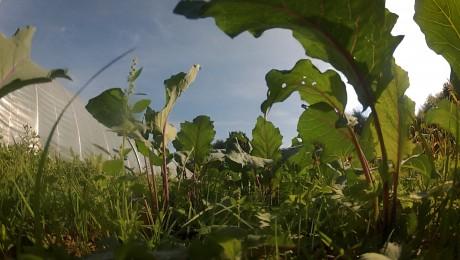 Solawi - gemeinsam landwirtschaften